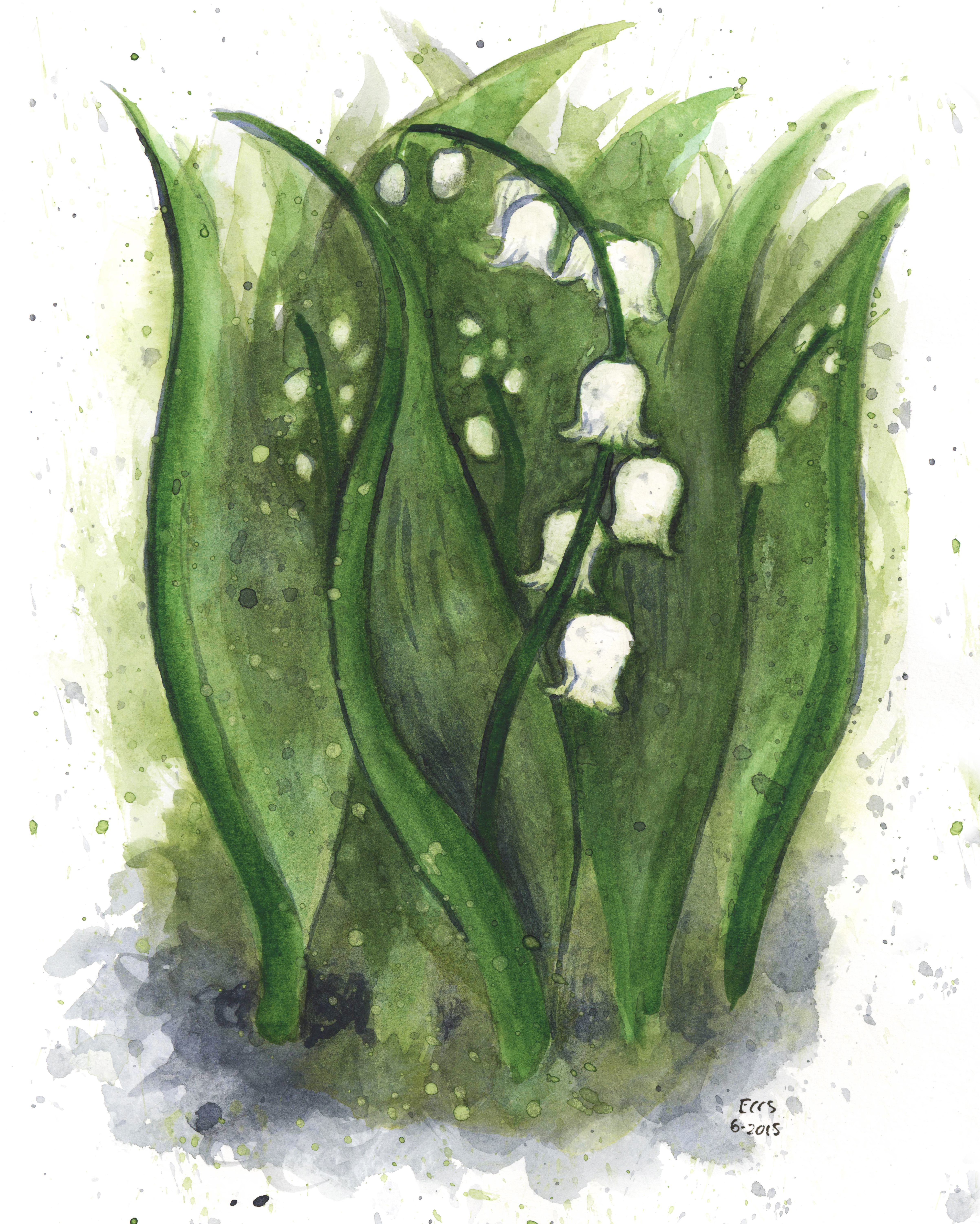 The Ghost Of The Lily Of The Valley Little Brown Wren